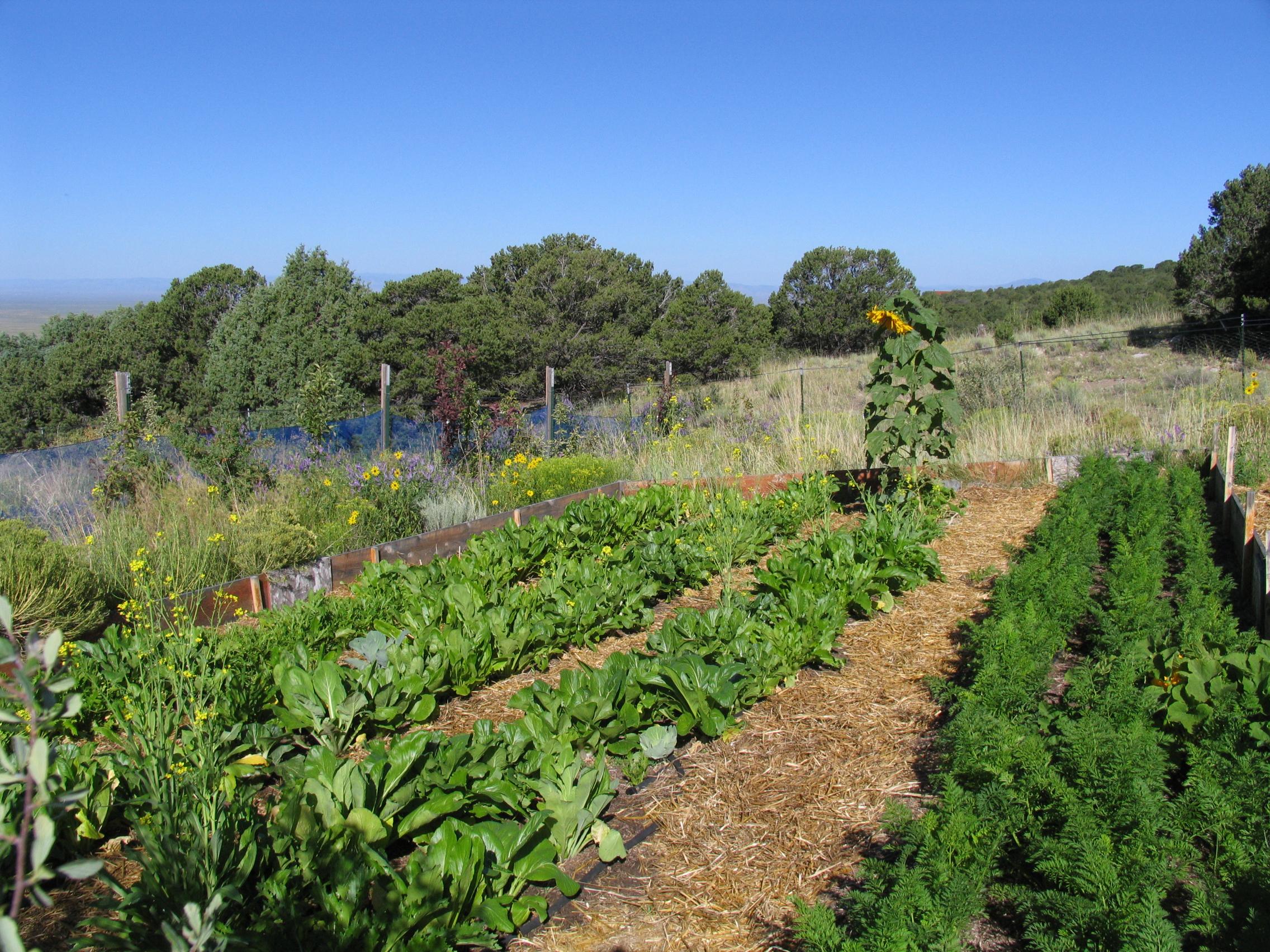 Crestone Farm 020