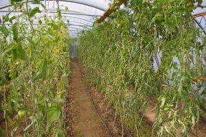 Shumei NA Farms 064