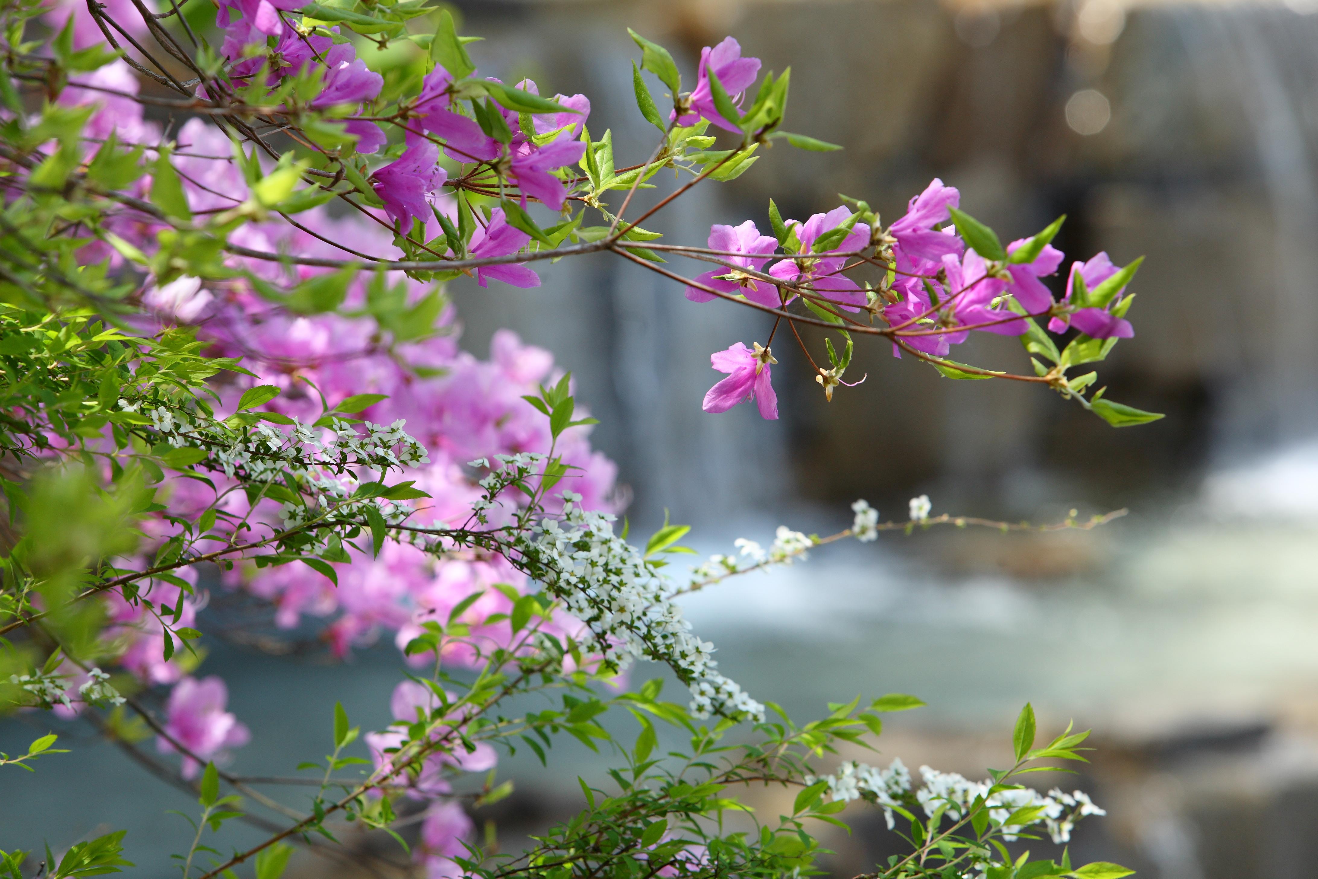 water cascade w pink flowers