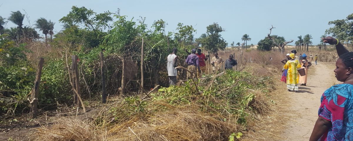 In Sambouya, land is being cleared for a vegetable garden, which will support about 50 women farmers.